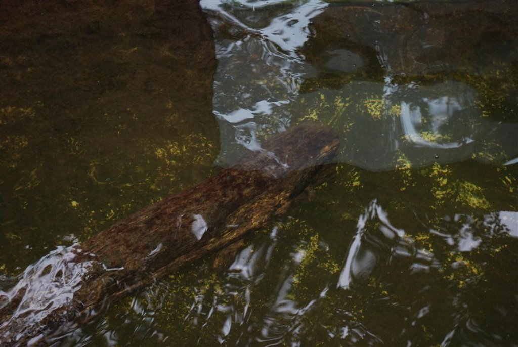 Zoo Duisburg AG - biologisch gesundes Wasser